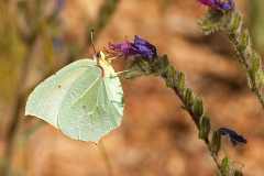 ecotherapy-butterfly-on-flower