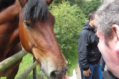 ecotherapy-man-feeding-horse